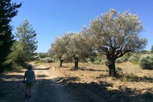 Heiße Wanderungen auf Rhodos
