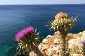 Küstenwanderung auf Rhodos mit Blick aufs Meer