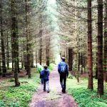 Durch den Steckerlaswald