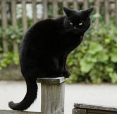 Schwarze Katze und Unglück? Korrelation oder Kausalität?