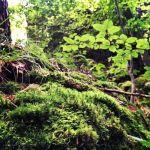 Wald und Moos