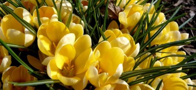 Goldne Tage und Frühling vor der Tür