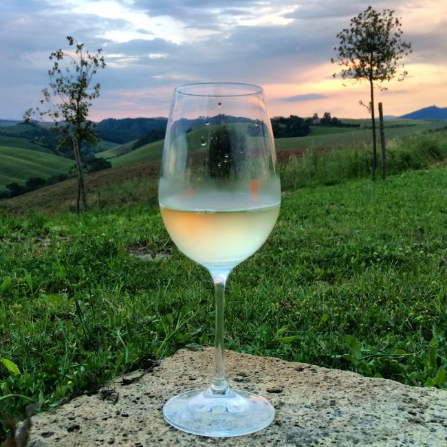 Mehr Wein vor Toskana-Landschaft