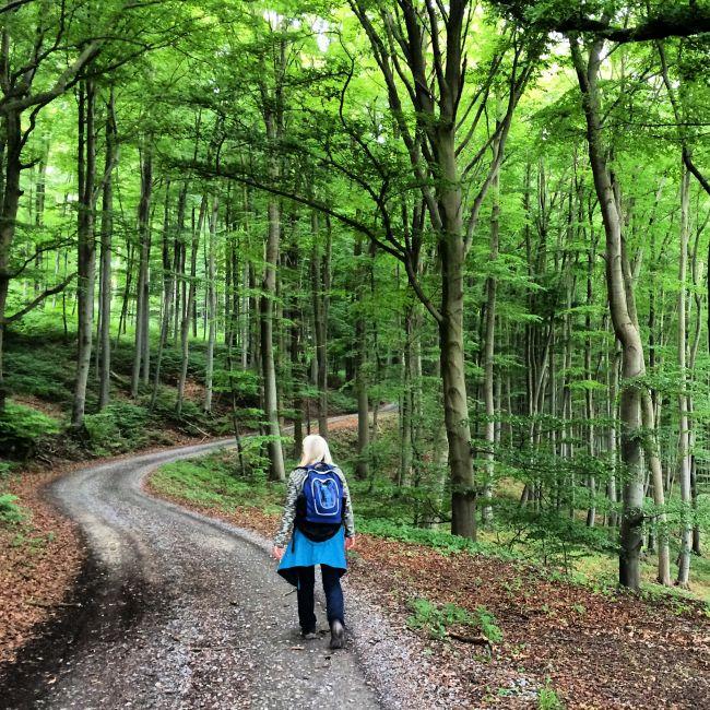 Wanderung durch mächtige Buchenwälder