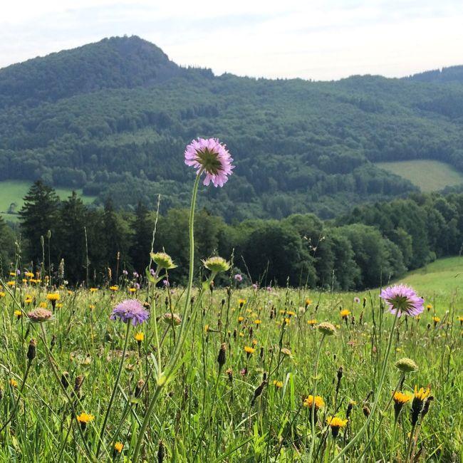 Letzte Wanderung auf die Milseburg (ein Berg ohne Burg)