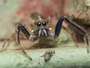 Spinnen-Begegnung
