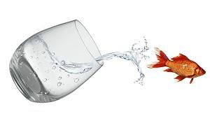 Belebtes Wasser