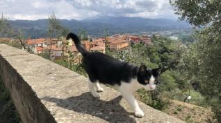 LaSpezia-2018-059
