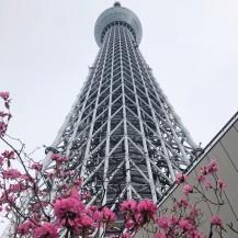 Japan-2019-03